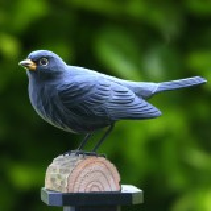 Wildlife Garden træfugl - solsort