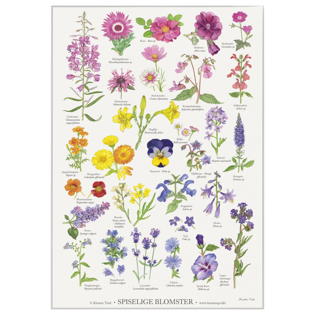 Koustrup & Co. plakat i A2 - spiselige blomster