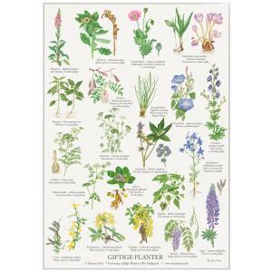 Koustrup & Co. plakat i A2 - giftige planter