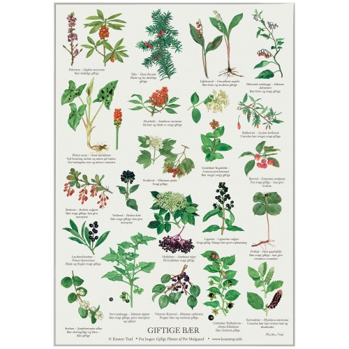 Koustrup & Co. plakat i A2 - giftige bær