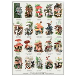 Koustrup & Co. plakat i A2 - spiselige svampe