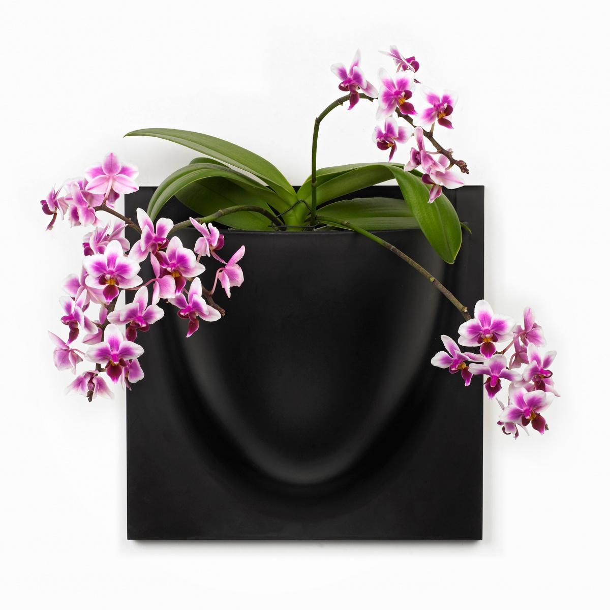 VertiPlants vægkrukke - sort
