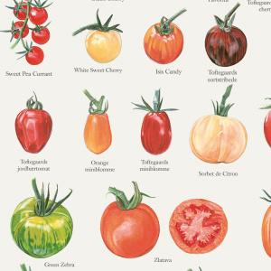 Koustrup & Co. plakat i A2 - tomater