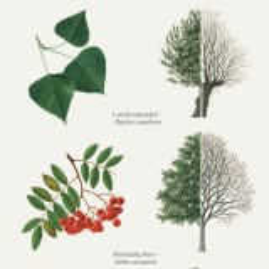 Koustrup & Co. plakat i A2 - træer