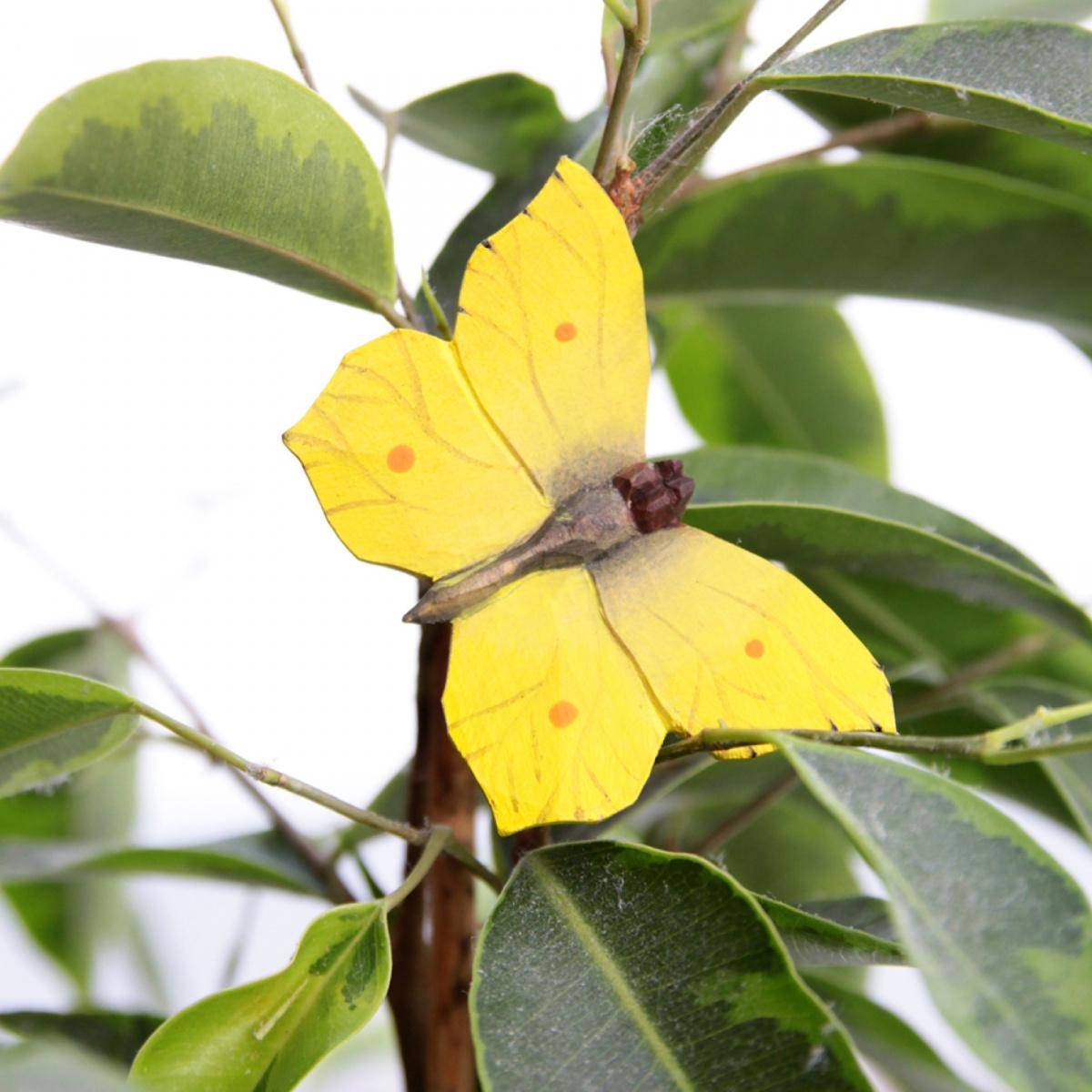 Wildlife Garden sommerfugl - citronsommerfugl