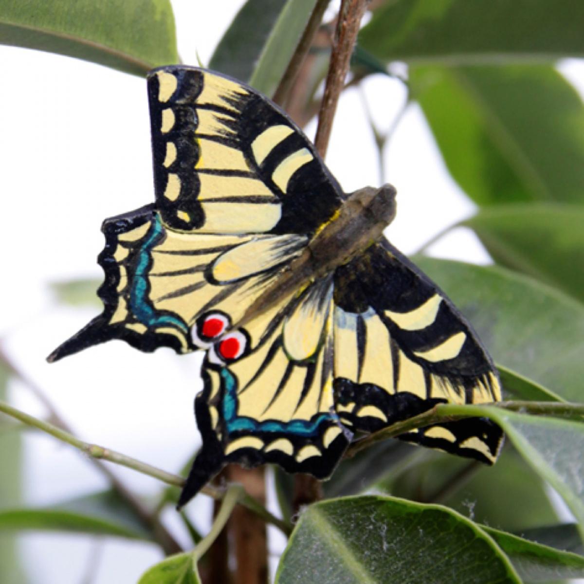 Wildlife Garden sommerfugl - svalehale