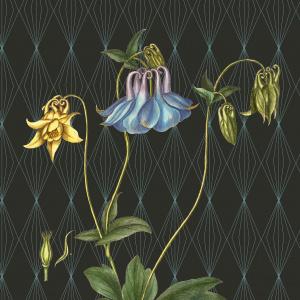 Flora Danica kunsttryk i A2 - akeleje
