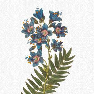 Flora Danica kunsttryk i A2 - jakobsstige