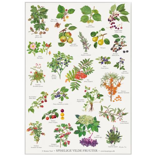 Koustrup & Co. plakat i A2 - spiselige vilde frugter