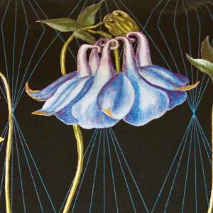 Flora Danica pude - akeleje