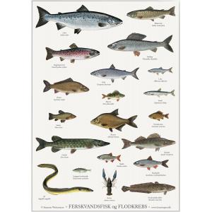 Koustrup & Co. plakat i A2 - ferskvandsfisk og flodkrebs