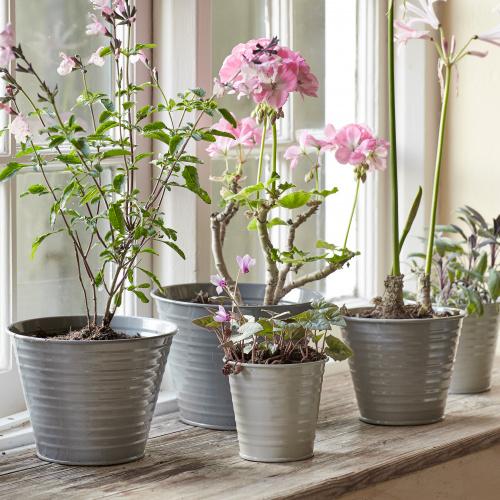 Sophie Conran sæt med 5 potter - grå