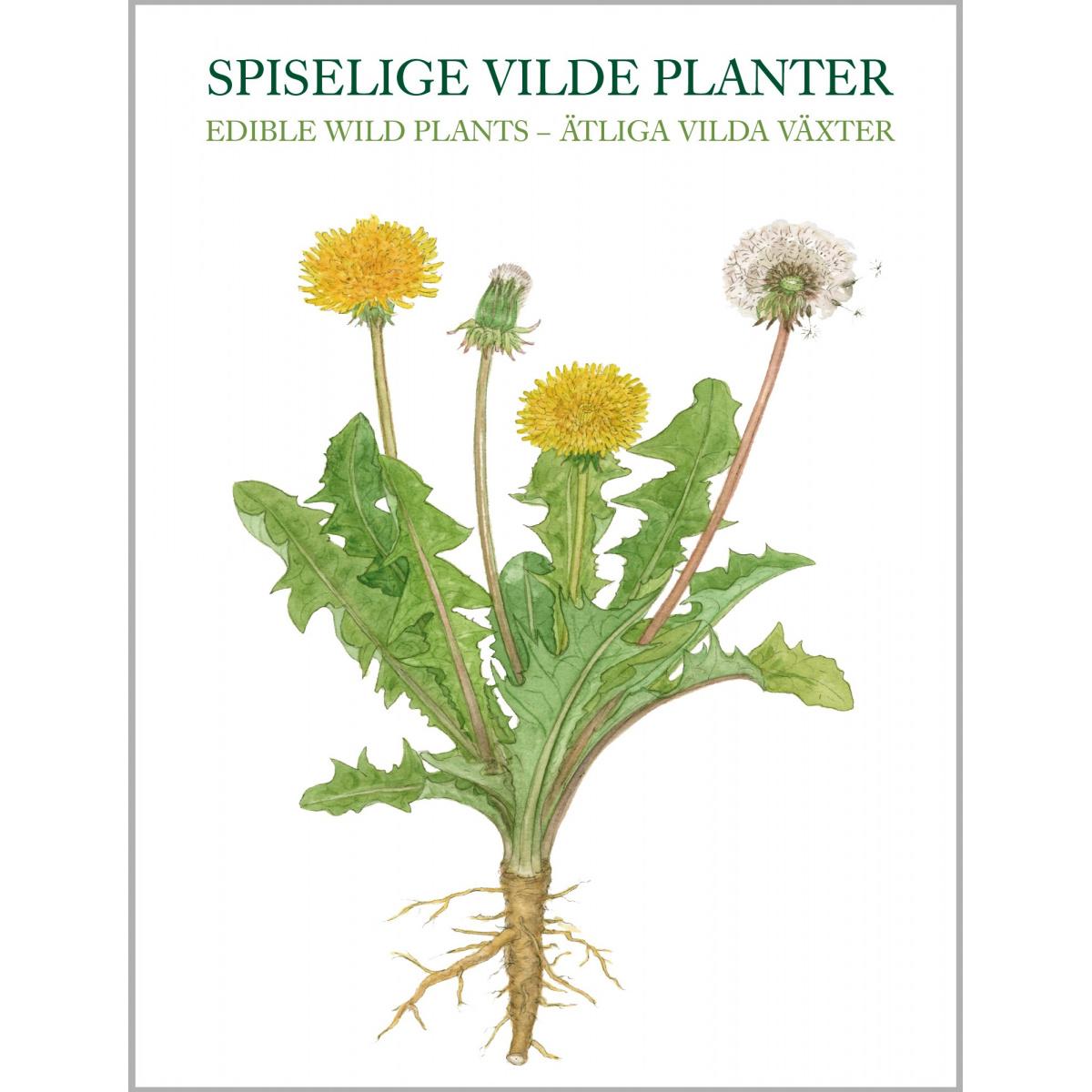 Koustrup & Co. kortmappe - spiselige vilde planter