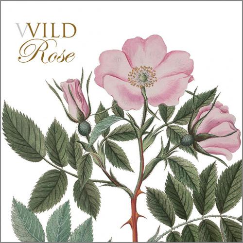 Flora Danica kortmappe - vild rose