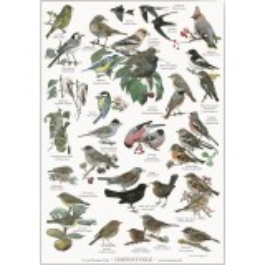 Koustrup & Co. plakat i A2 - havens fugle
