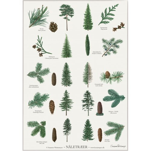 Koustrup & Co. plakat i A2 - nåletræer