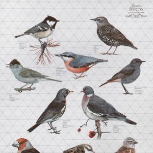 Koustrup & Co. øko viskestykke - fugle, grå