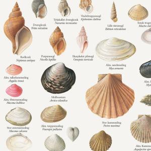 Koustrup & Co. plakat i A2 - muslinger og snegle