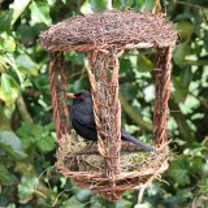 Wildlife World åben fuglerede i flet