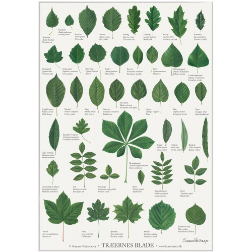 Koustrup & Co. plakat i A2 - træernes blade