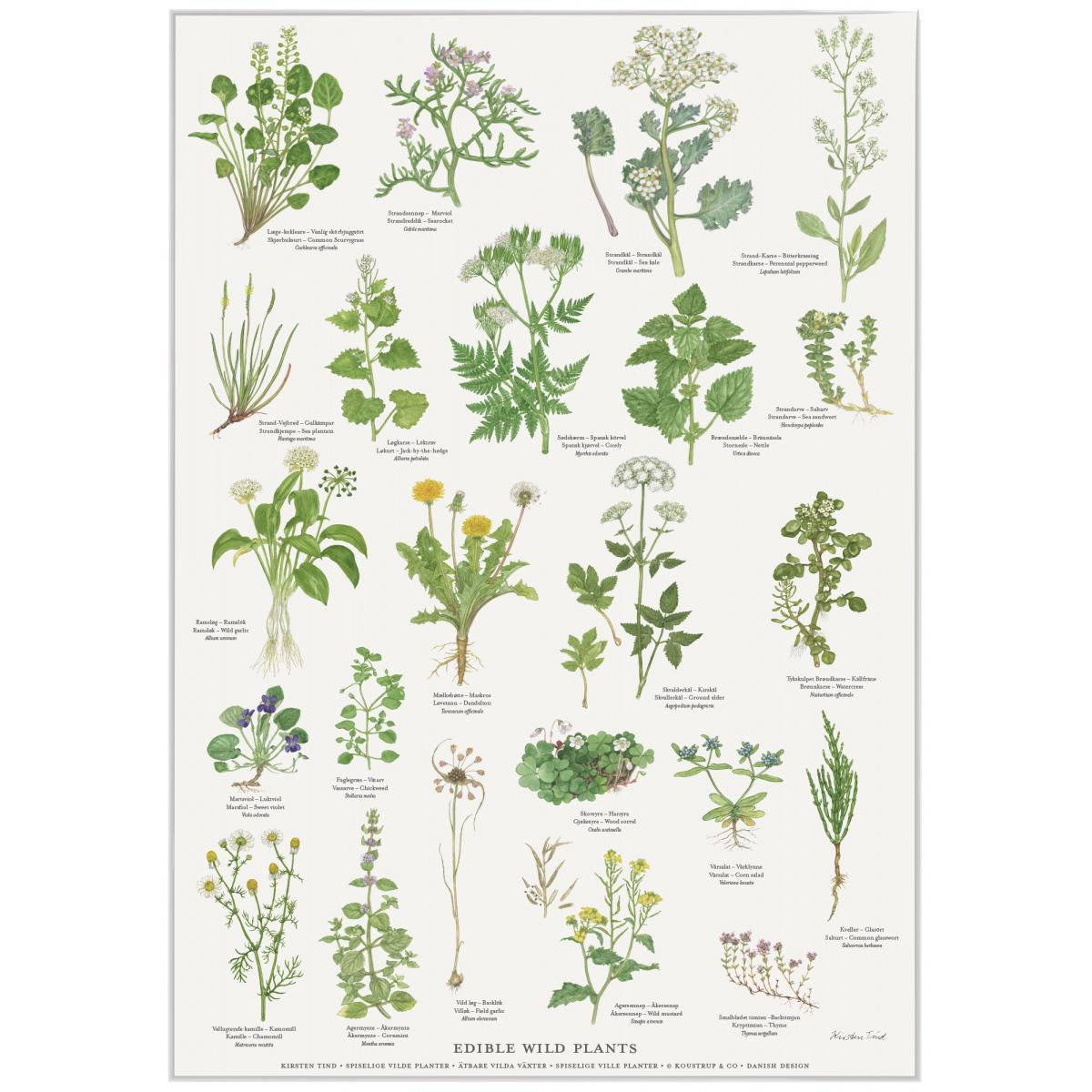 Koustrup & Co. plakat i A2 - spiselige vilde planter