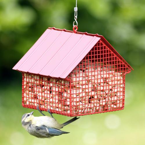 Wildlife Garden hus til jordnødder - rød