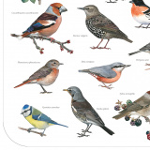 Koustrup & Co. dækkeserviet - havens fugle