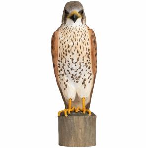 Wildlife Garden træfugl - tårnfalk