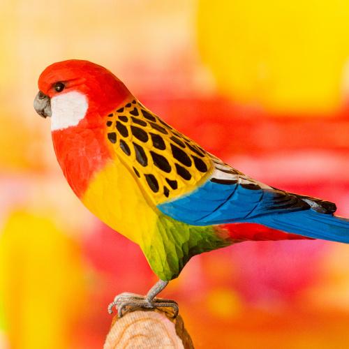 Wildlife Garden træfugl - rosellaparakit