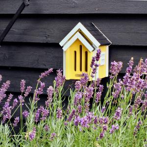 Wildlife Garden sommerfuglebo - gul