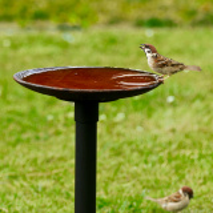Wildlife Garden fuglebad i støbejern