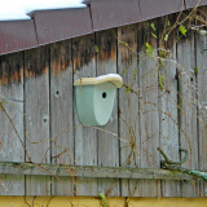 Denk fuglehus