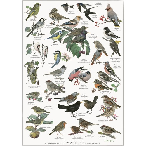 Koustrup & Co. plakat i A4 - havens fugle