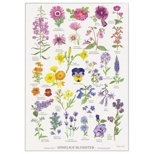 Koustrup & Co. plakat i A4 - spiselige blomster