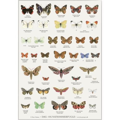 Koustrup & Co. plakat i A4 - sommerfugle