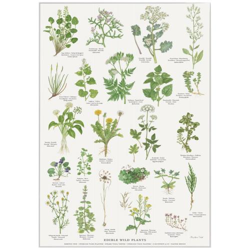 Koustrup & Co. plakat i A4 - spiselige vilde planter