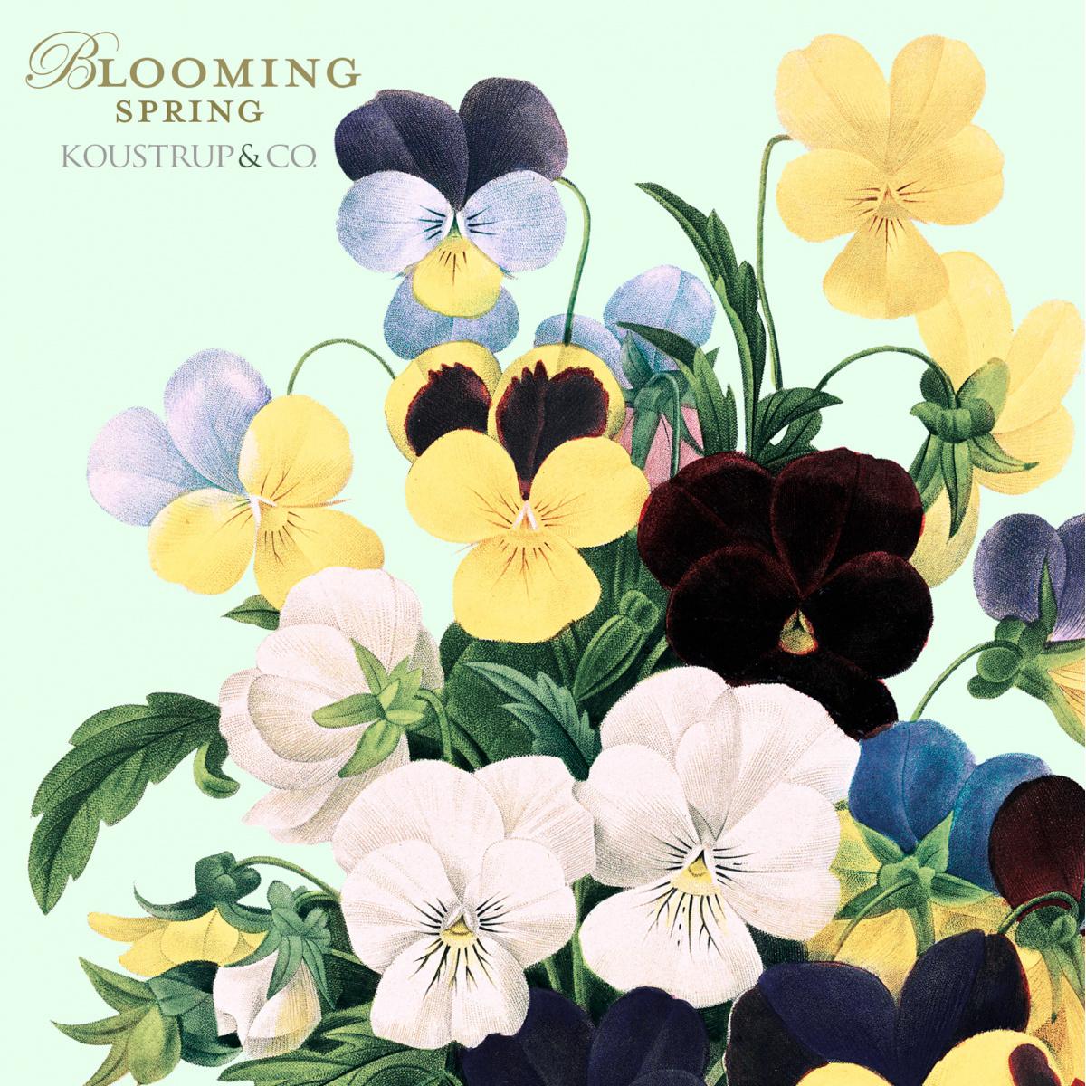 Koustrup & Co. kortmappe - blomstrende forår