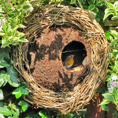 Wildlife World fuglehus krans i flet